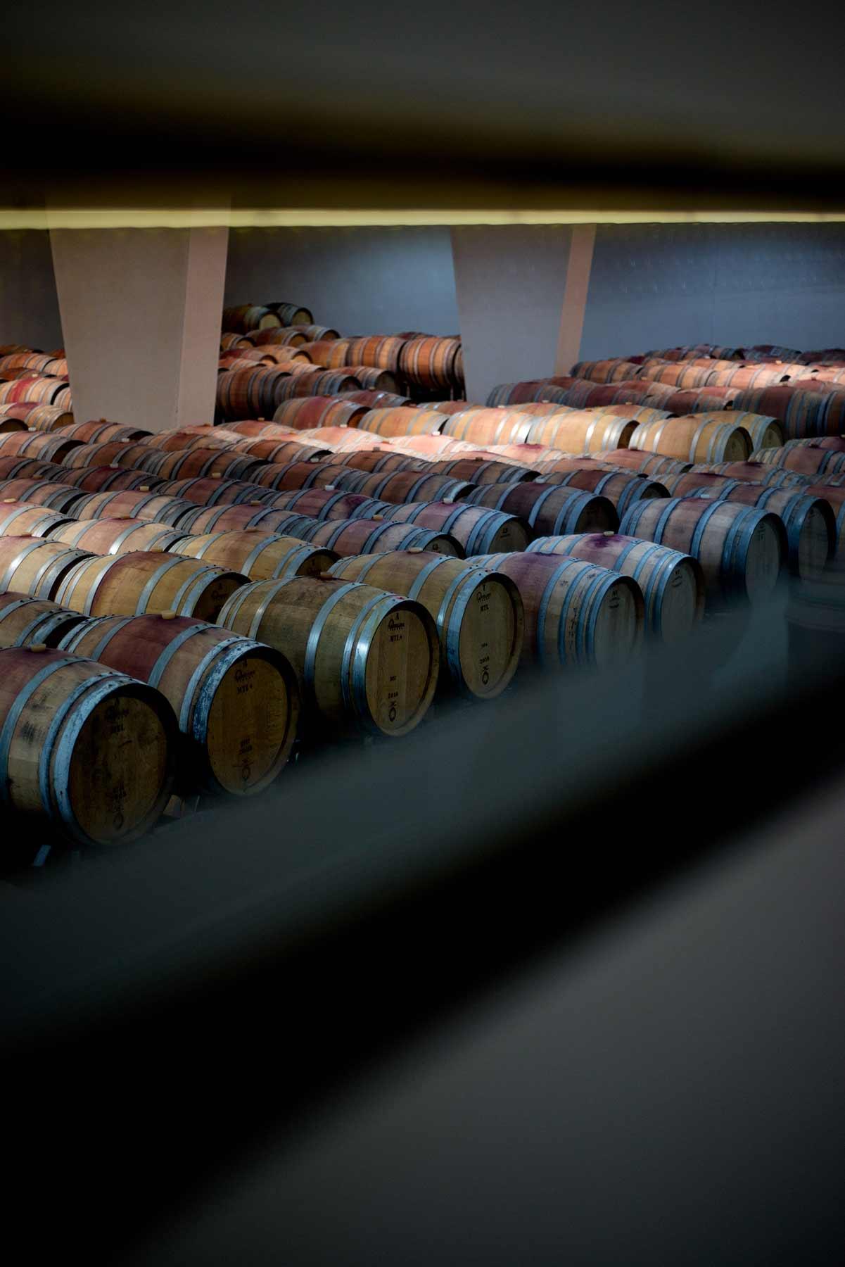 reportage fotografico cantine vinicole tormaresca. foto danilo dom calogiuri